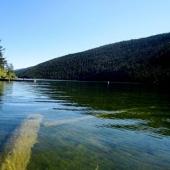 At Loon creek, looking east
